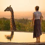 Liefde Is Niet: Vanuit de Bosjes Giraffen Afschieten